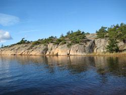 vegetasjon ved havet