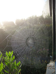 spinelvevet
