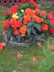 enkle blomster