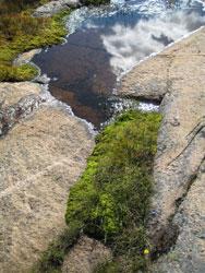 vann og grønne vekster