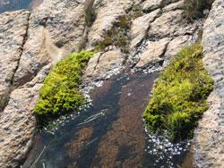 vann, stein  og grønne vekster