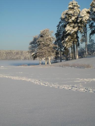Vinteren på Tunevannet